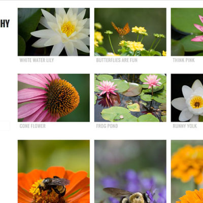 lotus photography website image 900px 150dpi